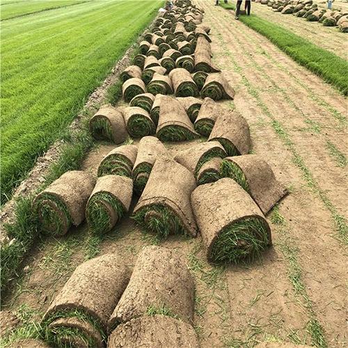 关于何时给石家庄草坪施肥的思考以及施肥的频率介绍!