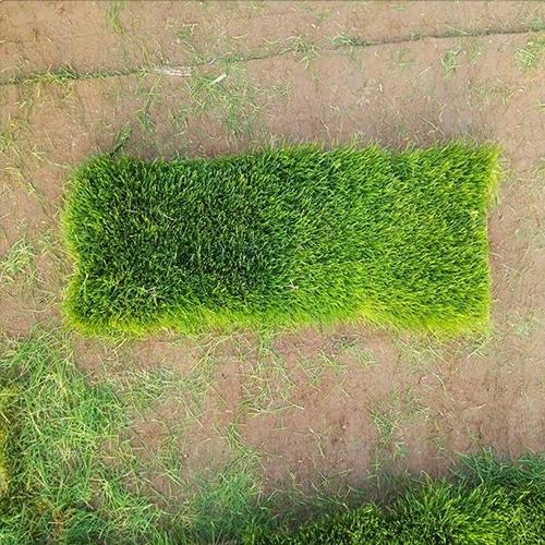 有哪些方法可以平整那些草坪的小凹陷或小洞?